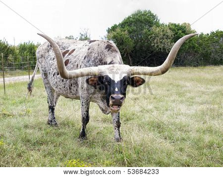 Are You Mooing At Me?!