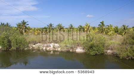 Reflex Of Coconut Trees On A River