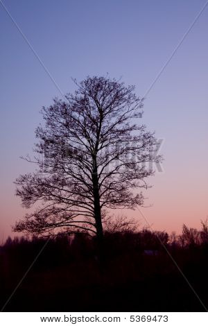 Tree Silhouette In The Sunset