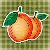vector vintage apricot sticker