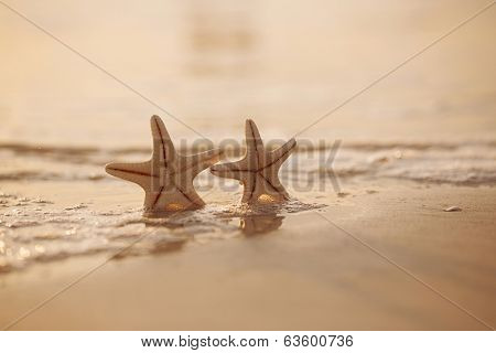 two starfish on sea ocean beach in Florida, soft gentle sunrise light color