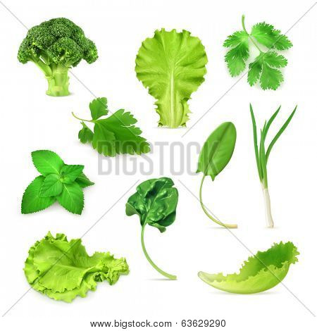 Green vegetables and herbs set, organic vegetarian food, vector illustration isolated on white background