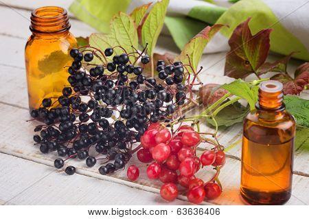 Elderberry, Viburnum, Medicines.