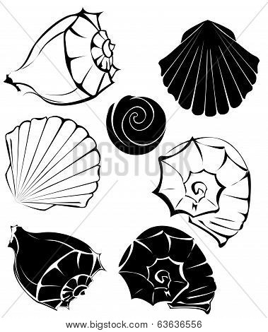 Silhouette Of Sea Shells