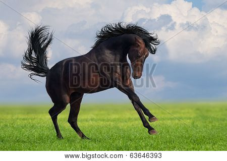 Horse gallop on a green grass