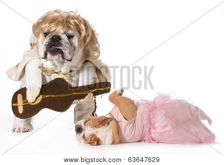 english bulldog wearing rock star costume with fan fainting at his feet
