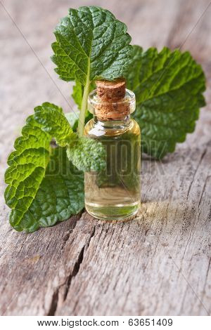 Melissa Extract In Glass Bottle With Fresh Leaves