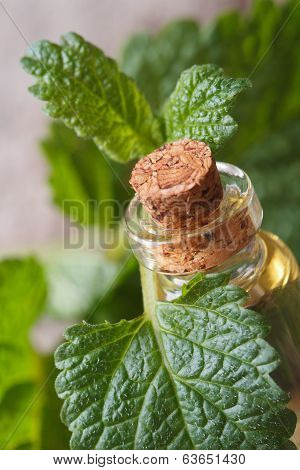Aromatic Oils Lemon Balm In A Glass Bottle With Fresh Leaves