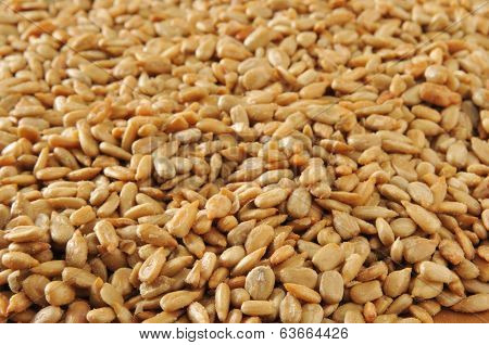 Sunflower Seed Backgrounds