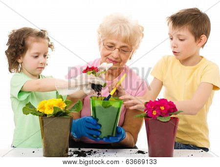 Gardening, Planting Concepts