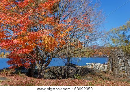 Red Maple Leaves In Autumn At Kawaguchiko Lake