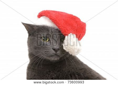 Christmas Sad Cat - Gray Cat Santa