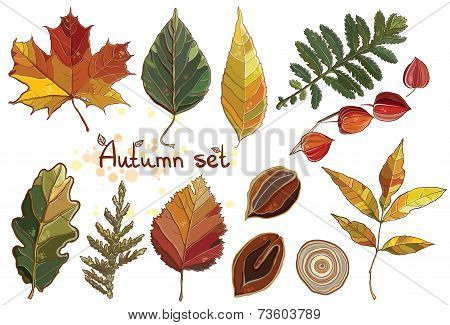 Vector Set With Autumn Set Leaves, Nuts, Tree. Thuja; Aspen; Physalis; Alder; Elm; Willow; Maple; Oa