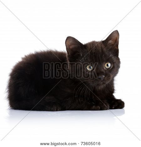 Black Small Kitten.