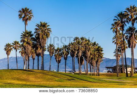 Palm Trees In Venice Beach
