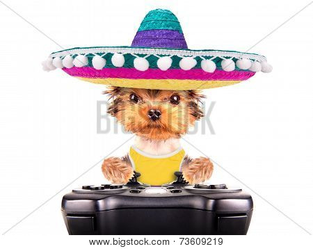 dog wearing a mexican hat play on game pad