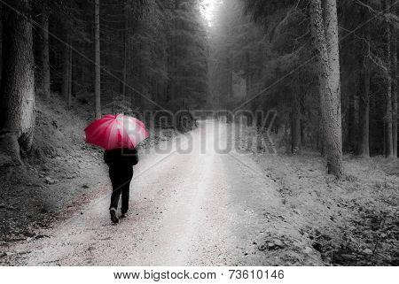 Walking In The Forest, Autumn Season