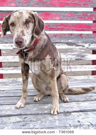 Sad Face Dog On Bleachers