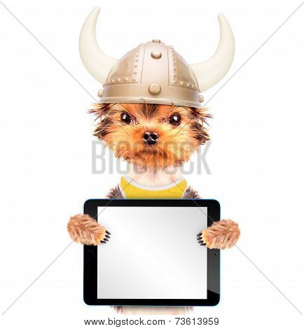 dog dressed up as a viking with tablet pc