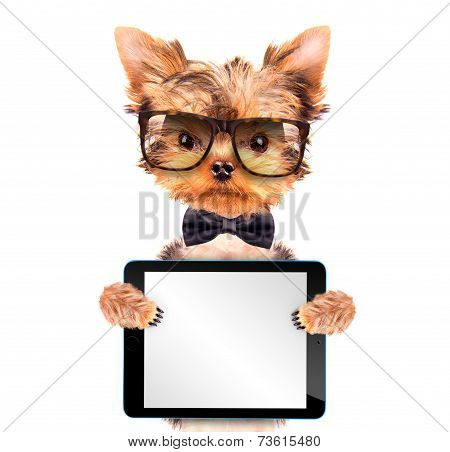dog wearing a neck bow with tablet pc