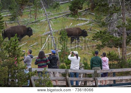 Tourists And Wildlife