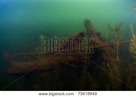 Underwater shot of the bottom of the pond with weed and logs