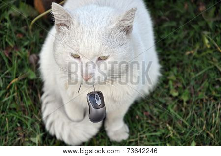 Cat and computer mouse.
