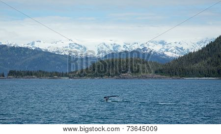 Whale in the Sound
