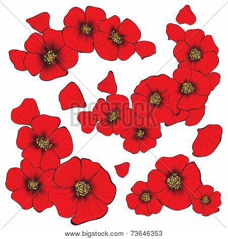 isolate poppy flowers with petal for decorate and design of gree