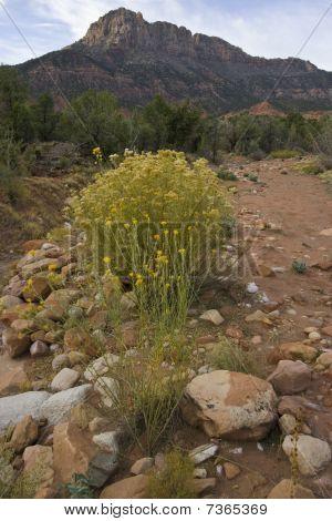 Desert Landscape With Rock Formation
