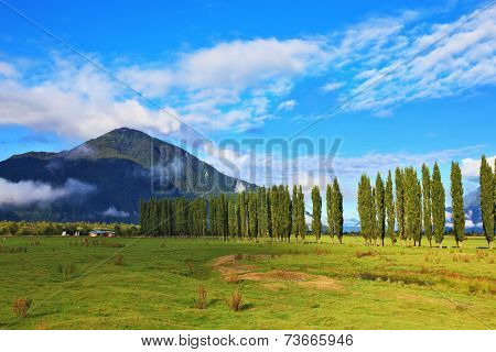 Rural areas in the Chilean Patagonia. Along green fields avenues of cypresses grow. Mountain range is visible in the distance