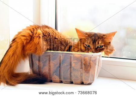 Cute Cat In A Box