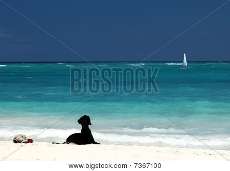 Black Labrador On White Sandy Beach