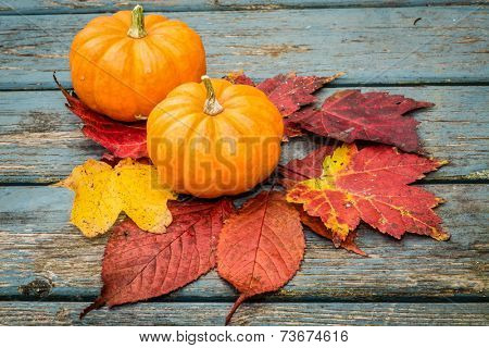 Small miniature pumpkins and fall leaves.
