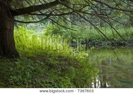 Streamside Green