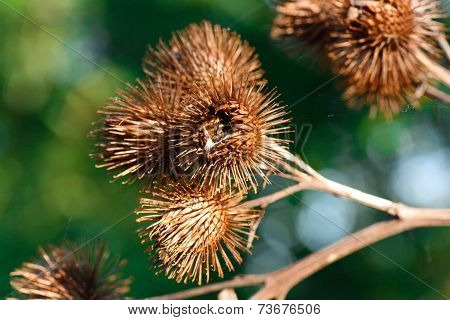 Spiky Pods