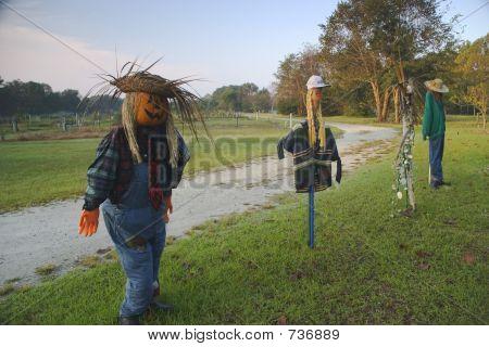 scarecrow gathering