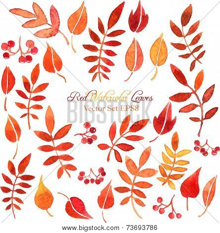 vector set of red leaves and berries