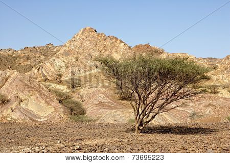 Omani Gravel Plain