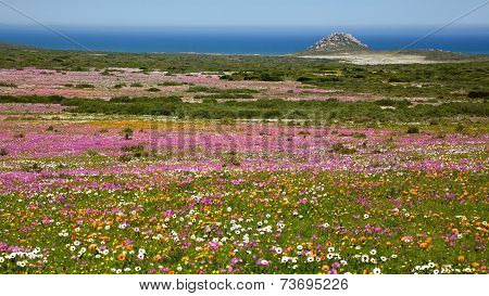 Wildflower Landscape