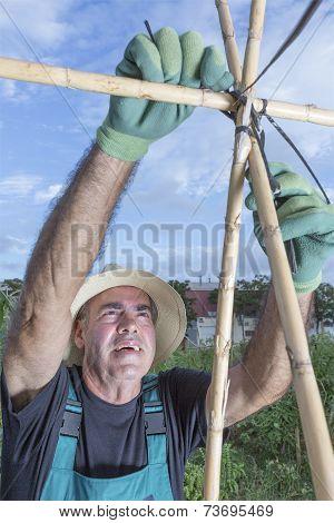 Farmer Preparing Canes