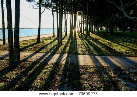 Shadows Through Trees