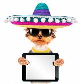 image of mexican-dog  - cute puppy dog wearing a mexican hat holding blank tablet pc - JPG