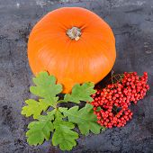 stock photo of rowan berry  - Square autumn composition with pumpkin - JPG