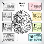 stock photo of hemisphere  - Brain hemispheres sketch infographic set with intellect and creativity symbols vector illustration - JPG
