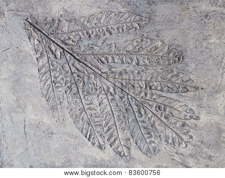 Big Gray Print  Plant Leaf