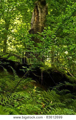 Forest details at Tara mountain and national park