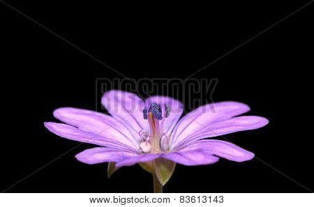 Purple flower isolated