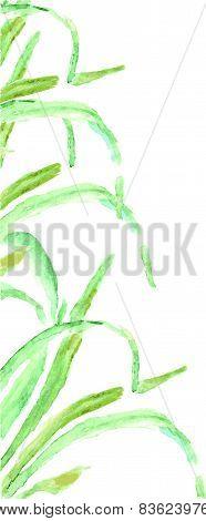 Watercolor green grass
