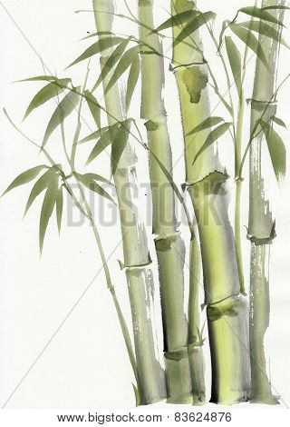 Watercolor Painting Of Bamboo